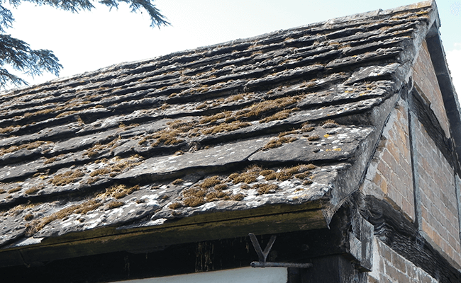 Mossy roof in Sussex